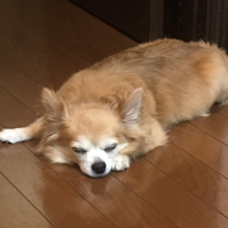 nana_phot_20170613.jpg