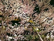 nana_phot_20170405.jpg