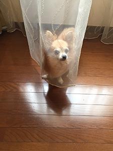 nana_phot_20170902.jpg