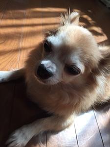 nana_phot_20171026.jpg