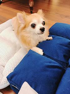 nana_phot_20180813.jpg